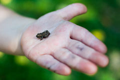 Little frog on baby's hand Stock Photos