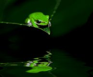Little frog in contemplation Royalty Free Stock Photography