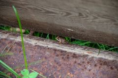 Little frog hides between block and beam royalty free stock image