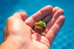 Little frog in my hand royalty free stock photos