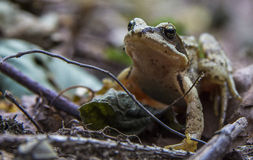 Little Frog. In park from Czech republic Royalty Free Stock Photography