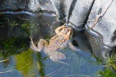 Little frog sitting on a green pumpkin Stock Photos