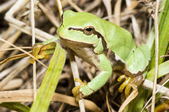 Little frog. Tiny green frog abroad on the ground Stock Photography