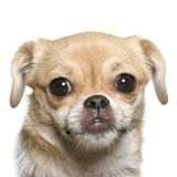 Little fun dog face Stock Images