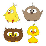 Little funny bird characters. Birds characters.  Fun little birds. Vector Illustration Stock Image