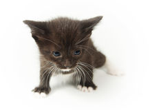 Little funny black kitty Stock Photography