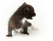 Little funny black kitty with white breast Stock Photo