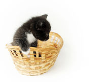 Little funny black kitty with white breast in the wicker basket Royalty Free Stock Photos