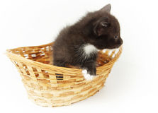 Little funny black kitty in the wicker basket Royalty Free Stock Photography