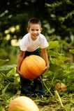 Little funny boy with pumpkin Stock Images