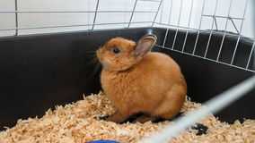 Little funny brown rabbit close-up in the cage Stock Images