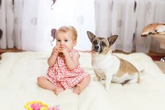 Little funny Caucasian girl the child sits at home on the floor on a light carpet with the best friend of the half-breed dog with. Spotty color and short hair Royalty Free Stock Photo