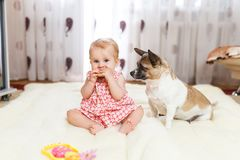 Little funny Caucasian girl the child sits at home on the floor on a light carpet with the best friend of the half-breed dog with. Spotty color and short hair Stock Photo