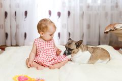 Little funny Caucasian girl the child sits at home on the floor on a light carpet with the best friend of the half-breed dog with. Spotty color and short hair Royalty Free Stock Image