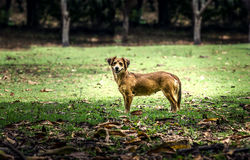 Little funny dog. Little dog in the countryside Royalty Free Stock Photos