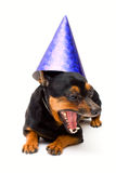 Little funny dog! isolated. Little funny dog. isolated on white Royalty Free Stock Image