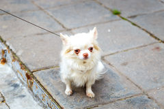 Little funny dog on street Stock Photo