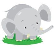 Little funny elephant or jumbo Royalty Free Stock Image