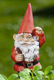 Little funny garden gnome in the garden Stock Image