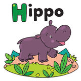 Little funny hippo, for ABC. Alphabet H. Children vector illustration of little funny hippo or hippopotamus. Alphabet H Stock Image