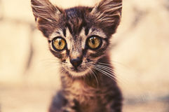 Little Funny kitten with big eyes Stock Photography
