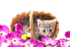 Little funny kitten Royalty Free Stock Photography
