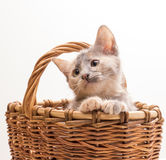 Little funny kitten Stock Photo