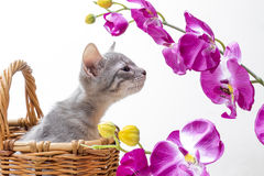 Little funny kitten Stock Photography