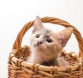 Little funny kitten Royalty Free Stock Photos