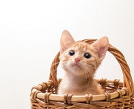 Little funny kitten Stock Image
