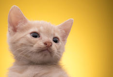 Little funny kitten Stock Images