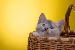 Little funny kitten Stock Images