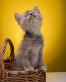 Little funny kitten Stock Photography