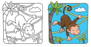 Little funny monkey on lians Royalty Free Stock Photo