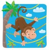 Little funny monkey on lians Stock Image