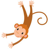 Little funny monkey Stock Photography