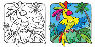 Little funny parrot coloring book Royalty Free Stock Image