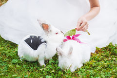 Little funny rabbit running on the field in summer royalty free stock photography