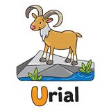Little funny urial or ram, for ABC. Alphabet U. Children vector illustration of funny wild urial or ram. Alphabet U Stock Image