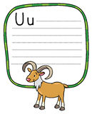 Little funny urial or ram, for ABC. Alphabet U. Children vector illustration of funny wild urial or ram. Alphabet U. Including frame with dotted lines and place Stock Photography