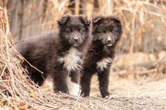 Two cute puppies standing next to each other royalty free stock photos