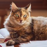 Little furry cat royalty free stock photos