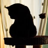 Little furry cat royalty free stock images