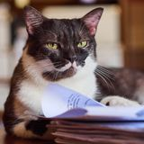 Little furry cat stock photos