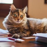 Little furry cat royalty free stock image
