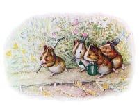 Little Garden Stock Image