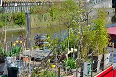 Little garden on a boat Royalty Free Stock Photography