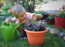 Little Garden Helper. Cute little boy helping with gardening and found an ant on the flower Royalty Free Stock Images