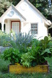 Little Garden Shed. With Fresh Cut Herbs in old Container Stock Photo
