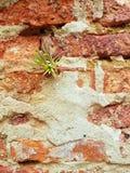 Little garden tree on the wall. The little garden tree on old bricks wall Stock Photos